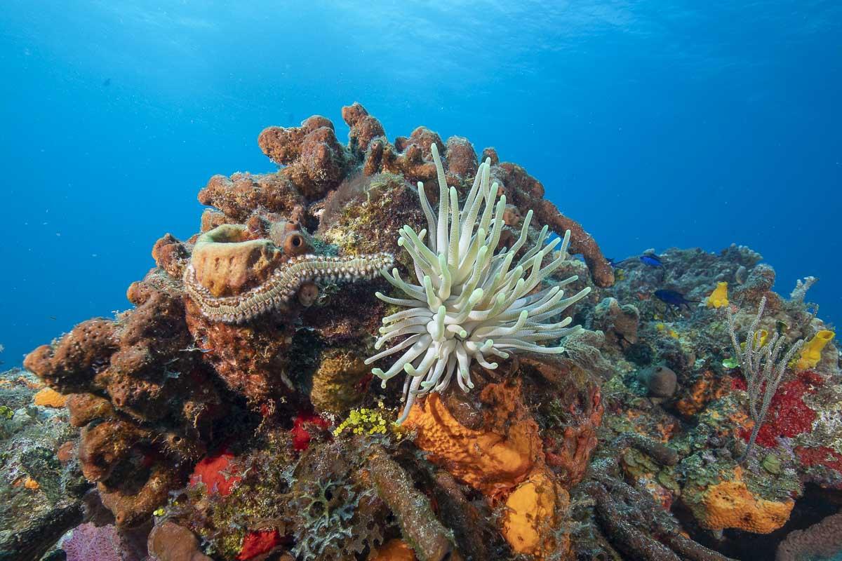 Coral with fireworm  -----      © Ralph Paprzycki