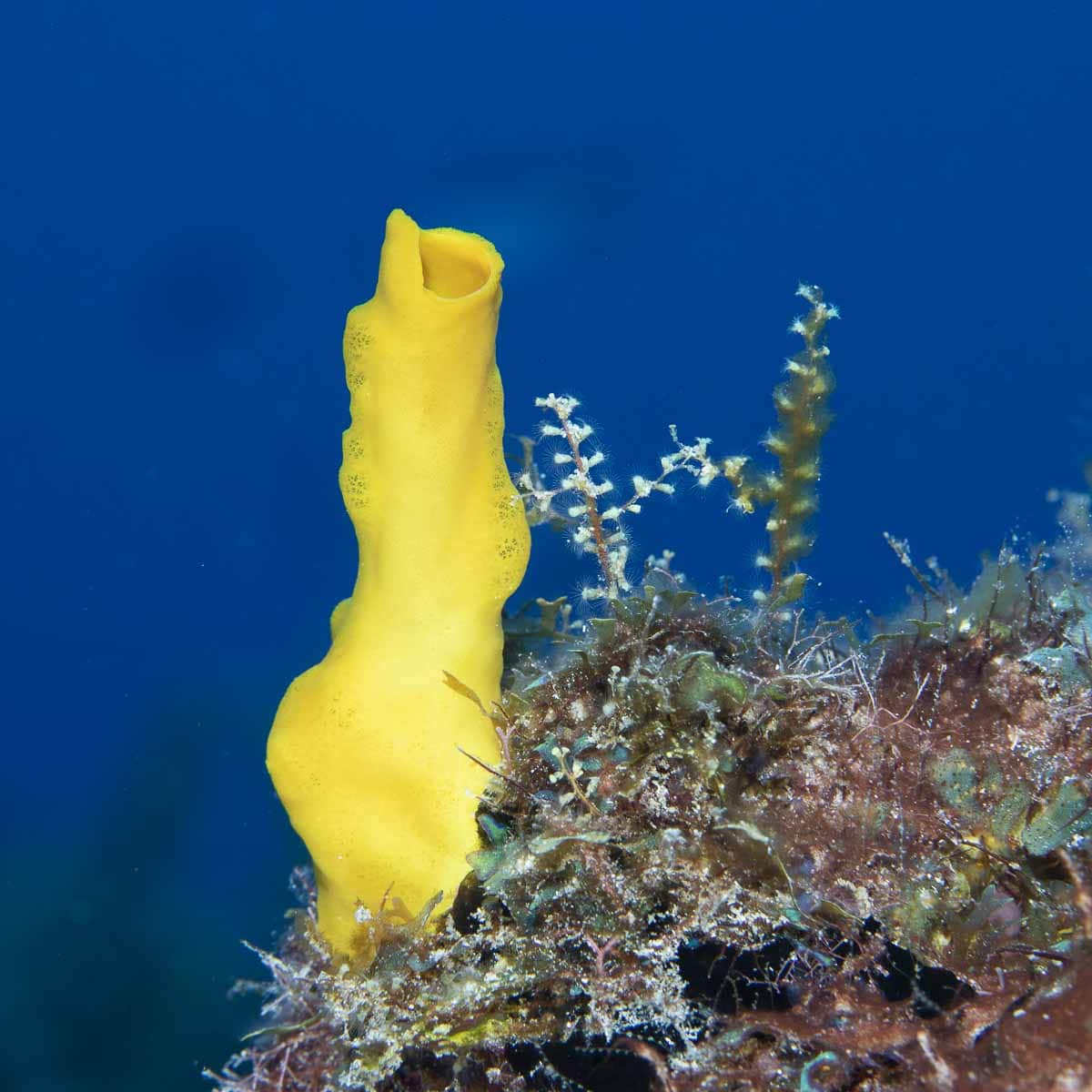 Variable boring sponge  -----      © Ralph Paprzycki